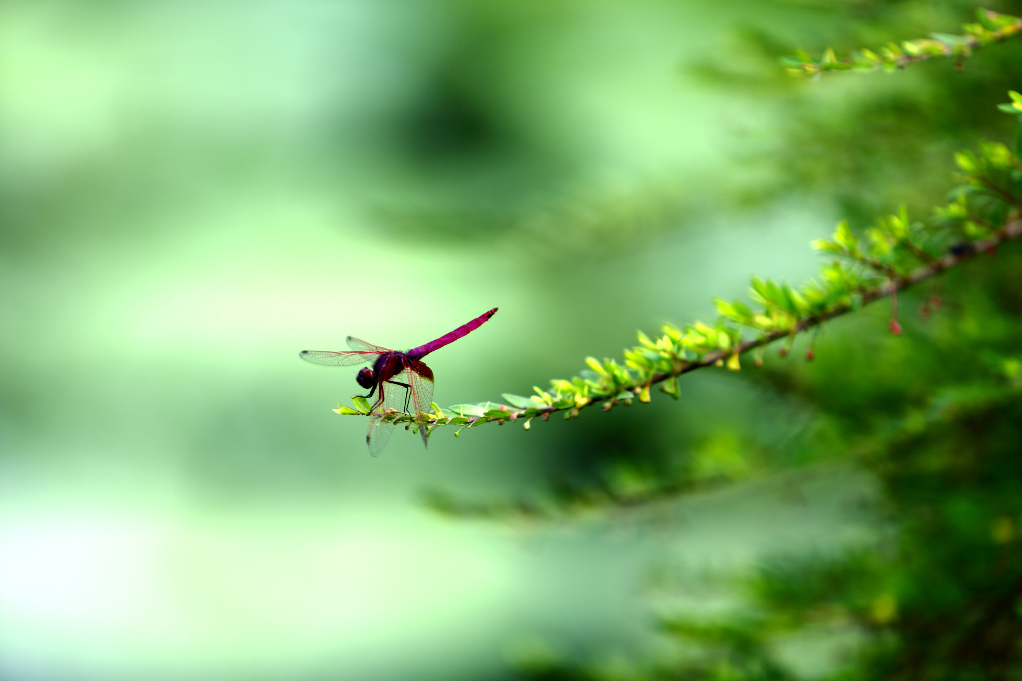 Photograph a dragonfly by 方長 來日 on 500px