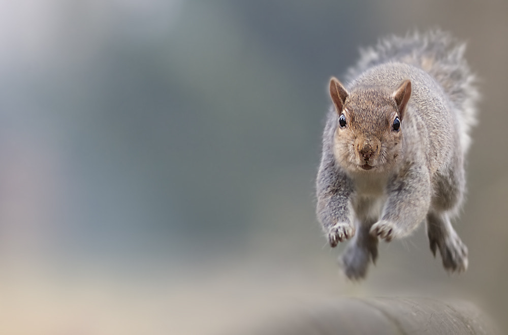 Photograph The run by Stefano Ronchi on 500px