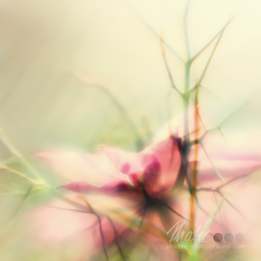 Photograph Caught in a Dream of Light by Viola Thalia on 500px
