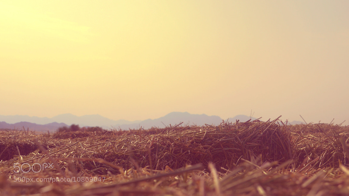 Photograph Desert sun by Nur Hidayah on 500px
