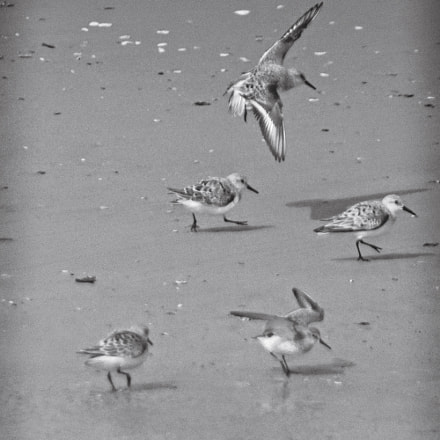 Plover and plover again