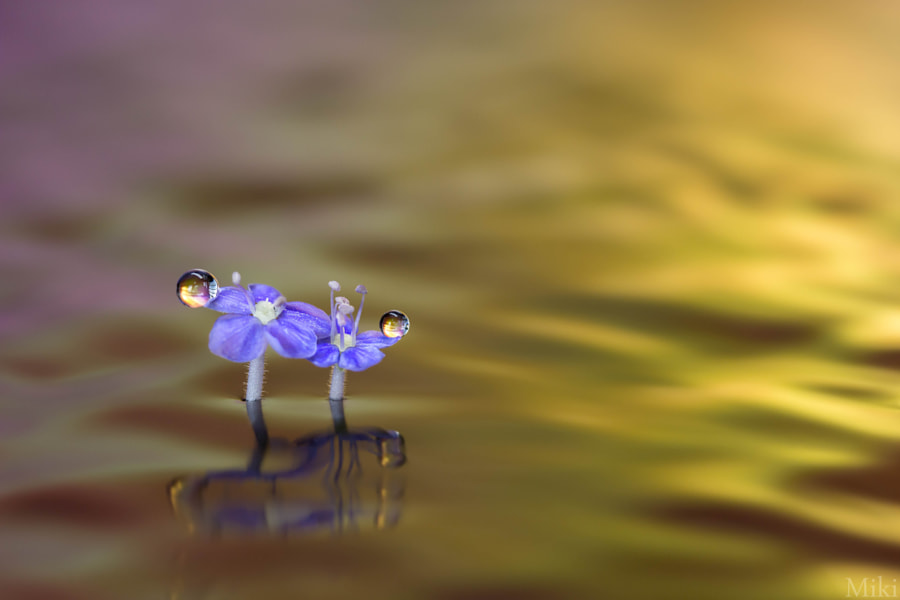 Photograph Stand by Me by Miki Asai on 500px