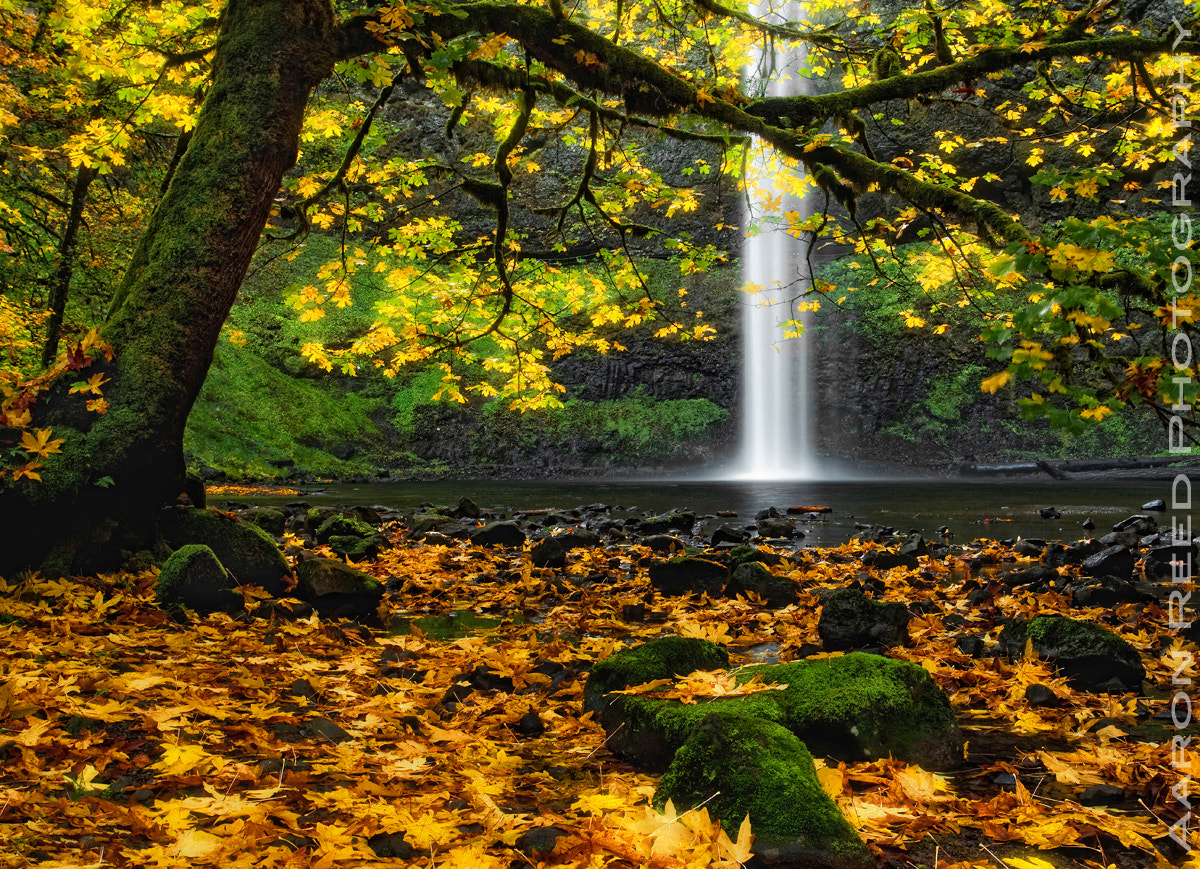 Photograph Fantasia by Aaron Reed on 500px