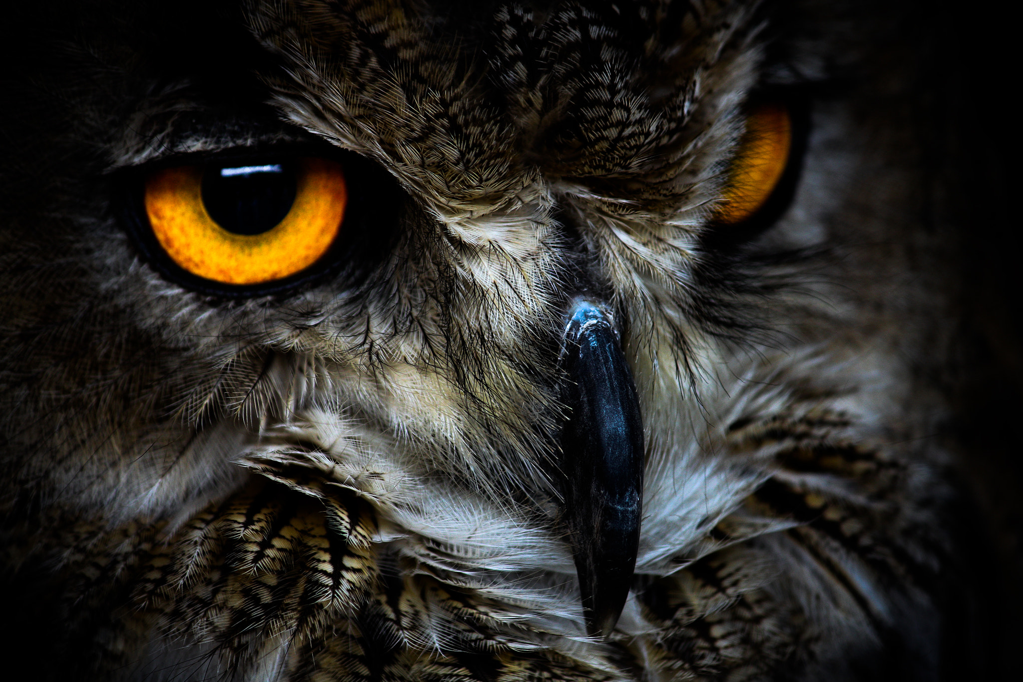 Photograph Owl by Dagnis Abols on 500px