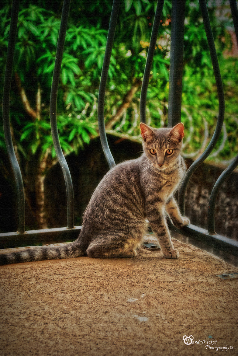 Photograph Demostenes the cat by PandaWicked  on 500px