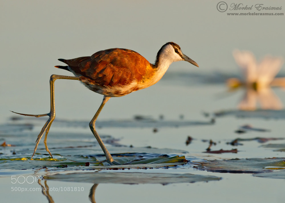 Photograph Twinkle Toes by Morkel Erasmus on 500px