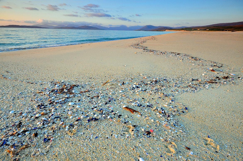 Photograph Seashells by Jon Pym on 500px