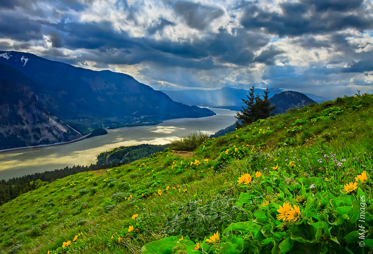 Photograph Columbia Gorge from Dog Mtn. by Michael Flaherty on 500px