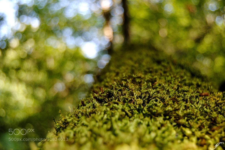 Photograph Sparkling green! by Burim Fejsko on 500px