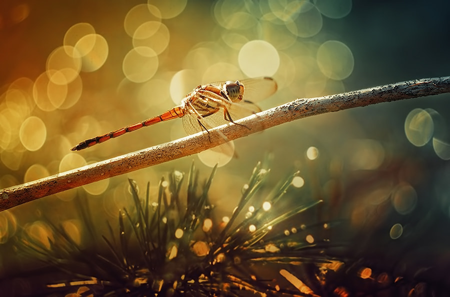 Photograph ** Morning with Bokeh ** by Donald Jusa on 500px