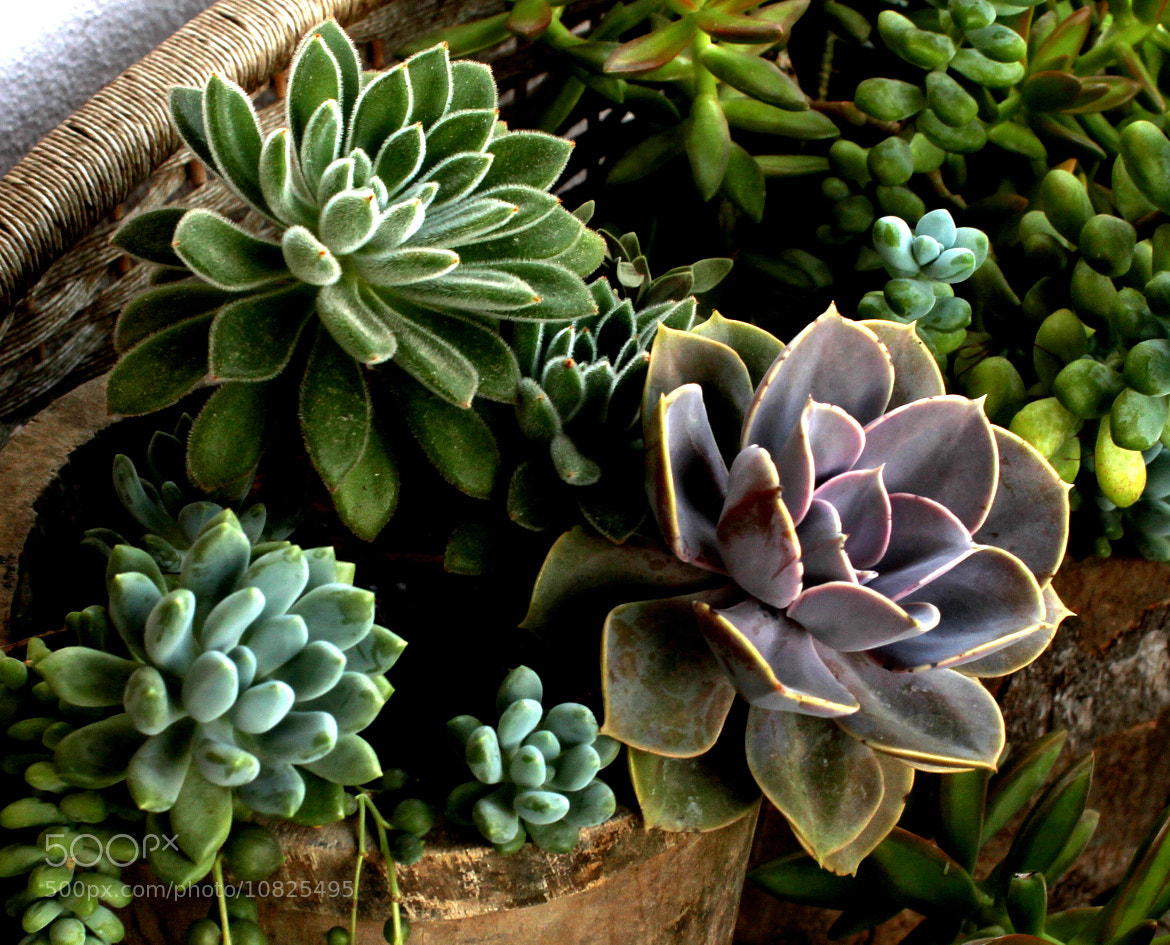 Photograph Succulents by zen free on 500px
