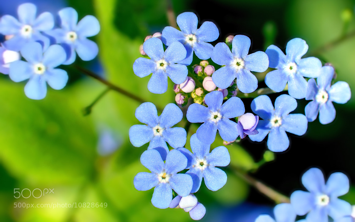 Photograph Little Blue by Luna Pictures on 500px