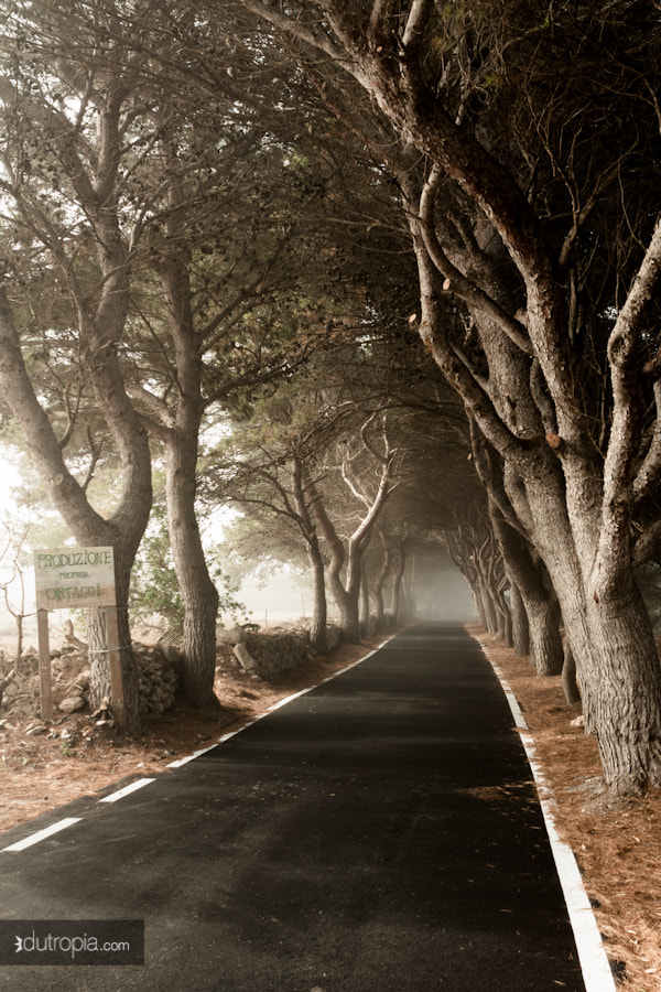 Photograph Neblina by Du Tropia on 500px