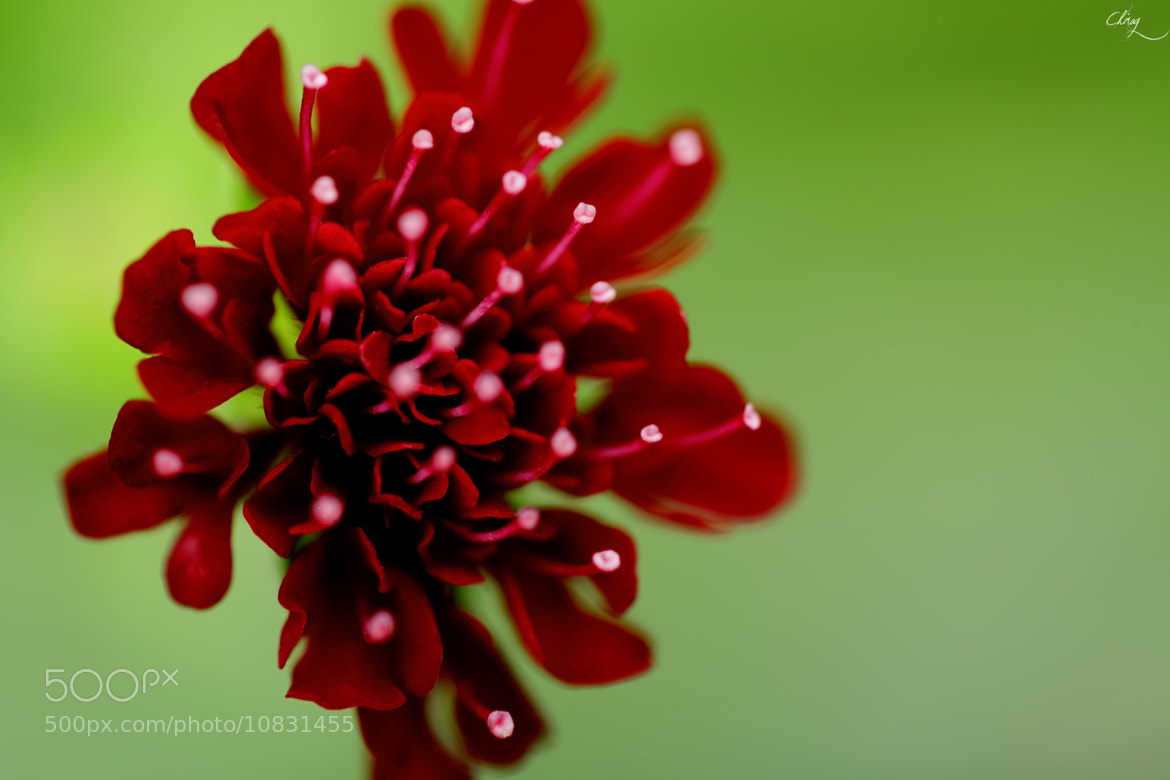 Photograph Beauty unfolding by Chirag Pradhan on 500px