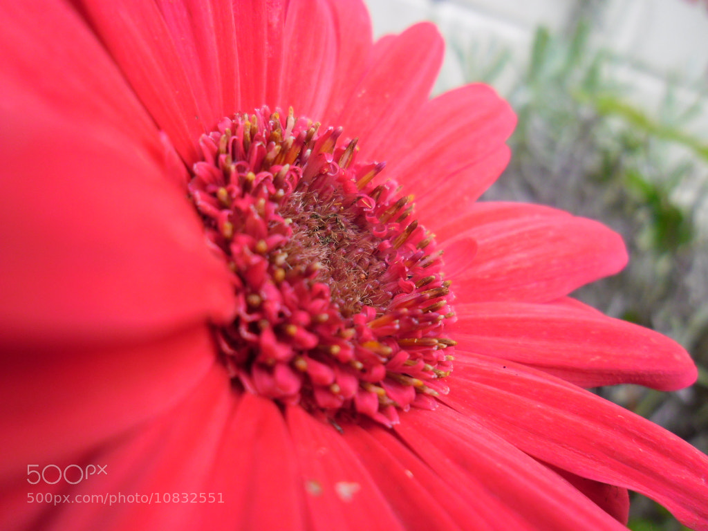 Photograph Pretty in pink by Laura Scott on 500px
