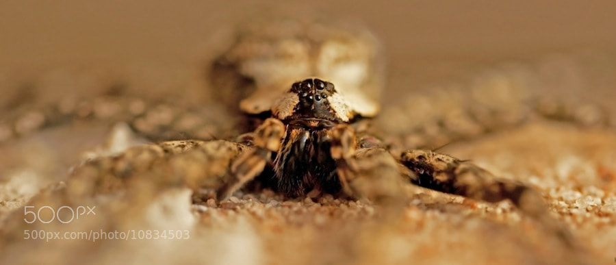 Photograph Octopus by Kristie McClenny on 500px