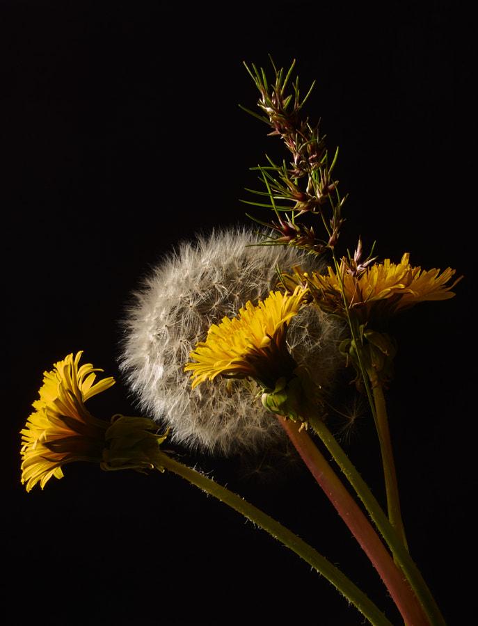 Spring Fantasy by SerOrion / 500px | @500px