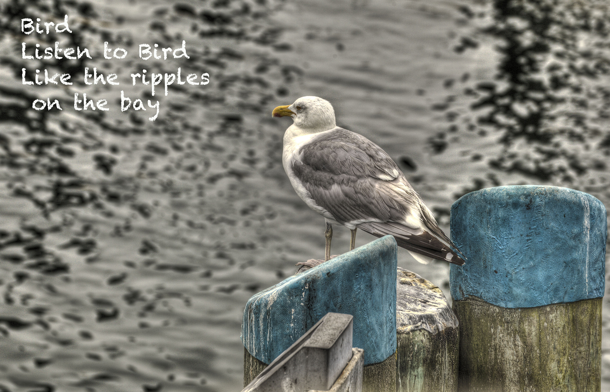 Photograph Gull ona Double Piling by Terry Letton on 500px