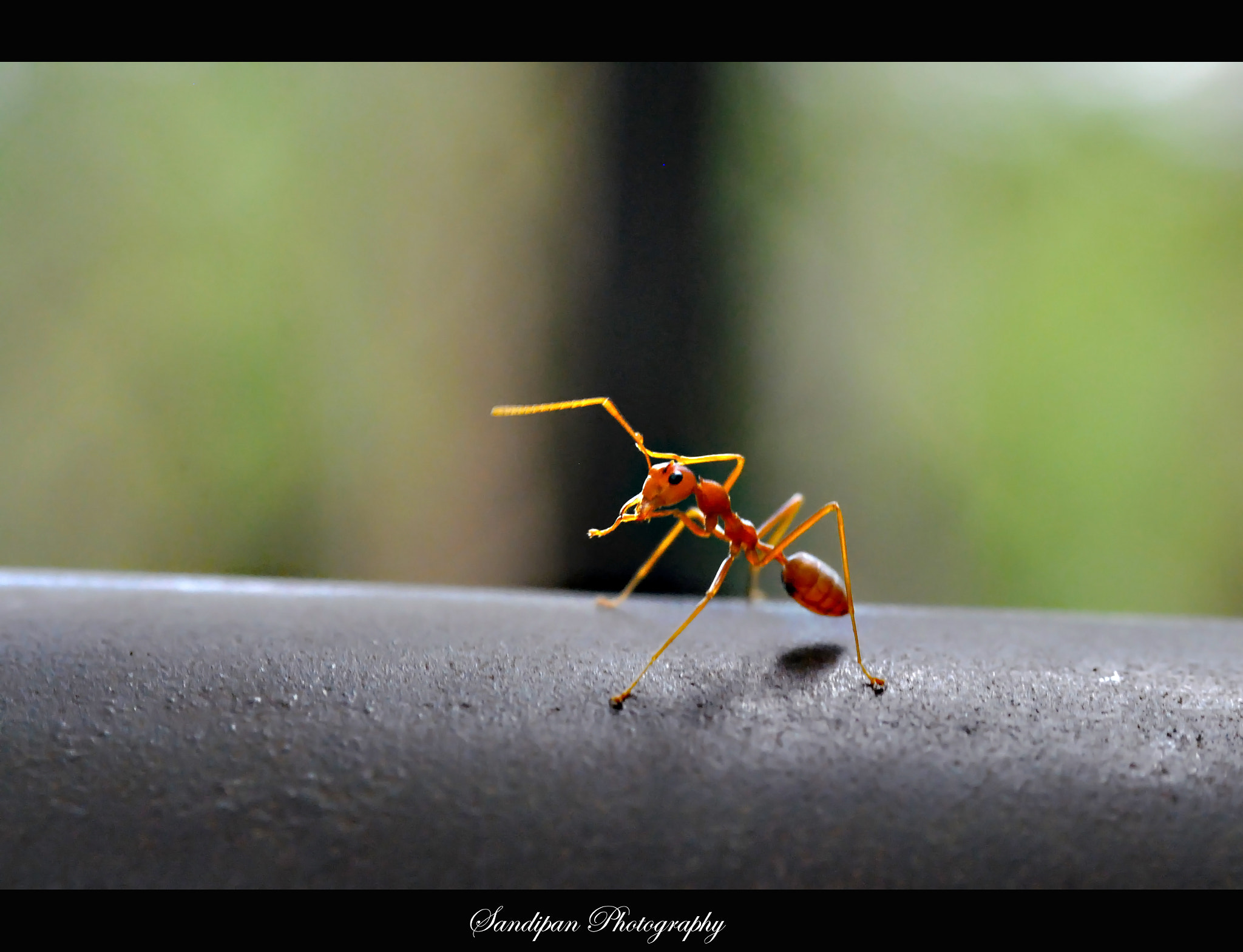 Photograph I can also dance by Sandipan Bhattacharya on 500px