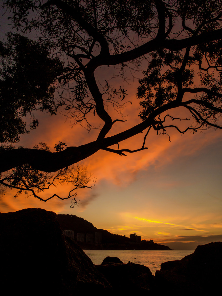 Photograph Sunset from the other side of the tree by PaulEmmingsPhotography  on 500px