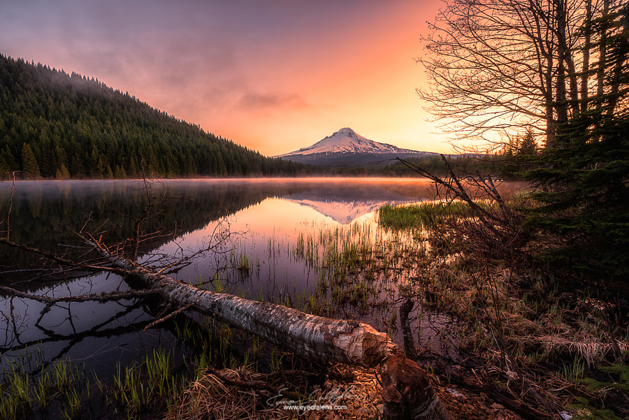 Photograph Trillium Chopped Down by Eamon Gallagher on 500px