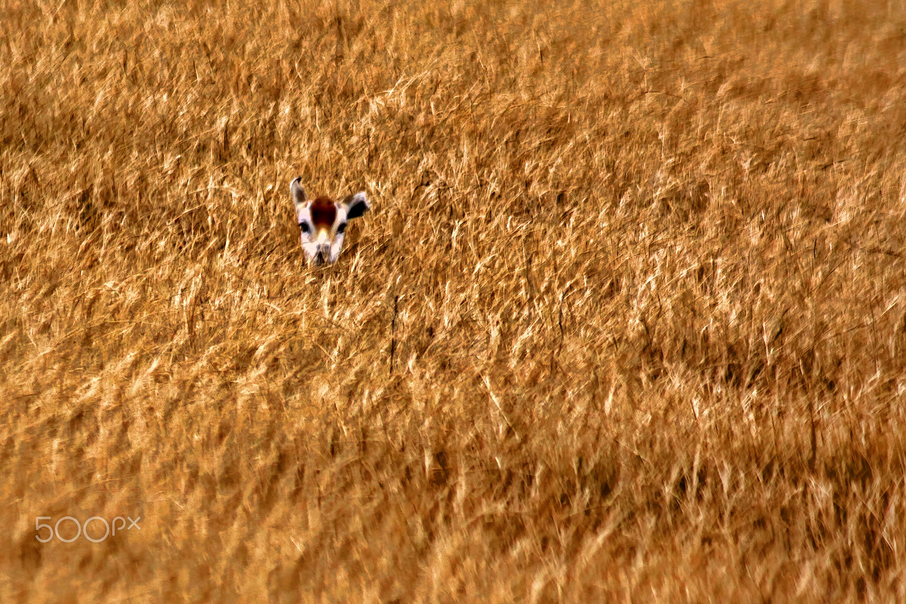 Photograph Perfect Hiding Place by Gary Holmes on 500px
