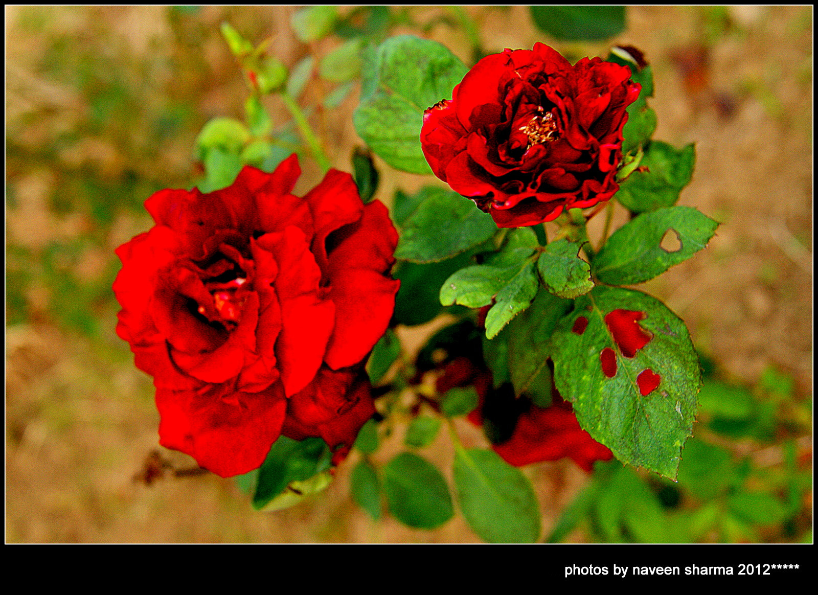 Photograph flowers my life by naveen sharma on 500px