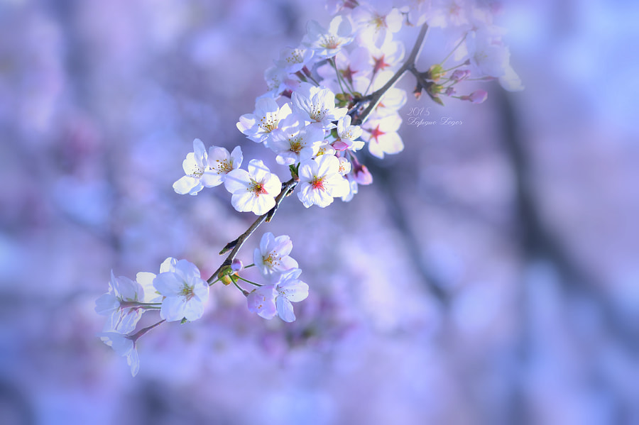 Greeting of spring~Sweet aroma  by Lafugue Logos on 500px.com