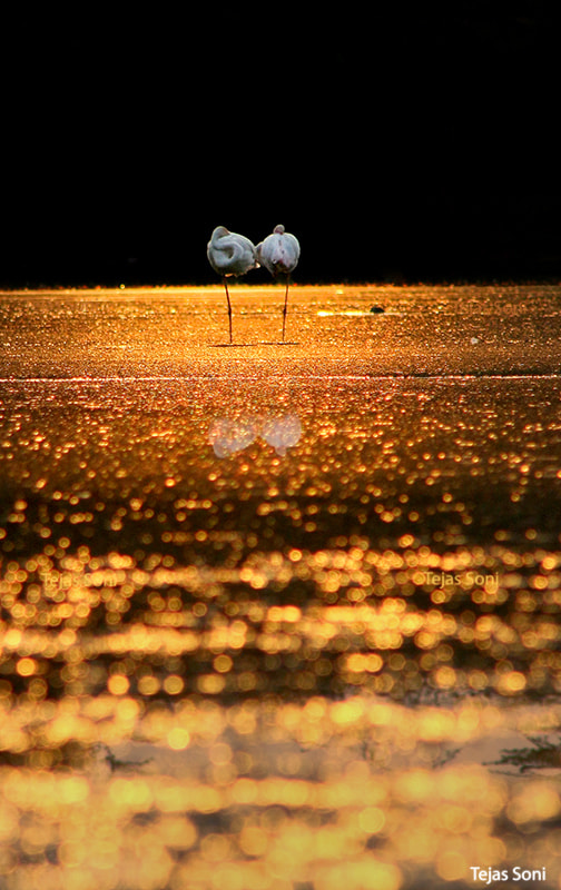 Photograph The Midas Touch by Tejas Soni on 500px