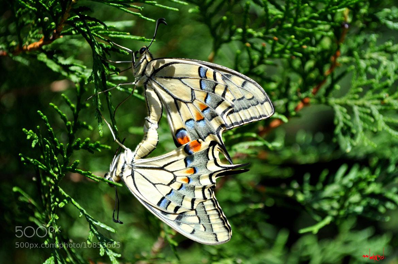 Photograph Butterflies by Manuchar Ghavtadze on 500px