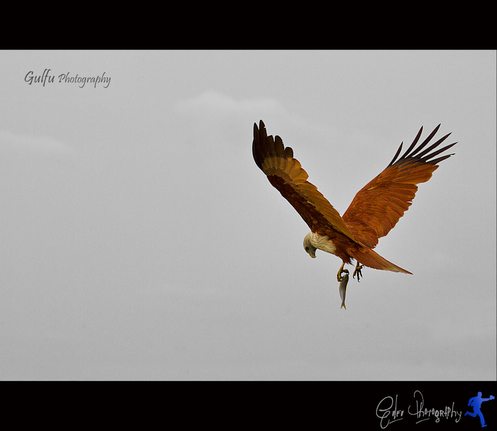 Photograph V for victory by Prasanth (Gulfu) on 500px