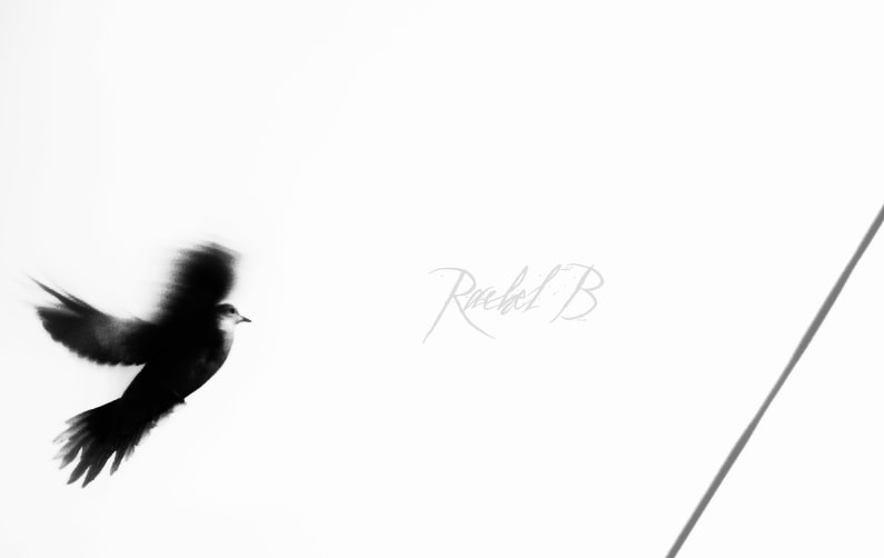 Photograph fly with the wind by Rachel Black on 500px