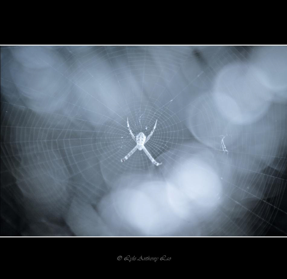 "Photograph ""Words are like the spider's web: a shelter for the clever ones and a trap for the not-so-clever."" - by Lyle Anthony Lao on 500px"