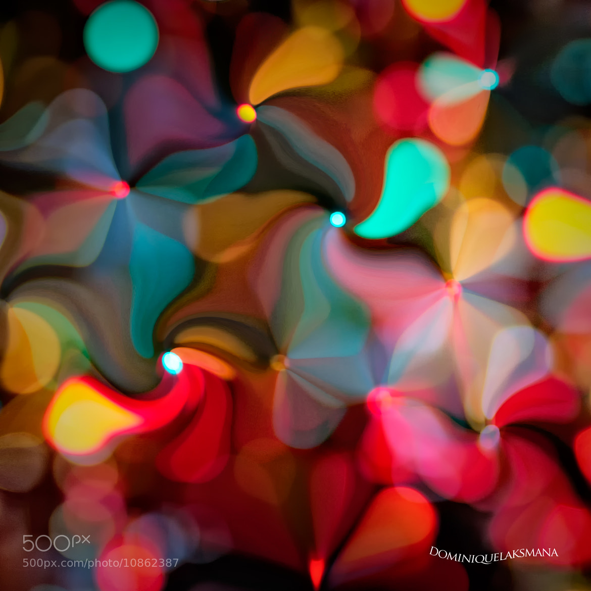 Photograph Flower Light by Dominique Laksmana on 500px