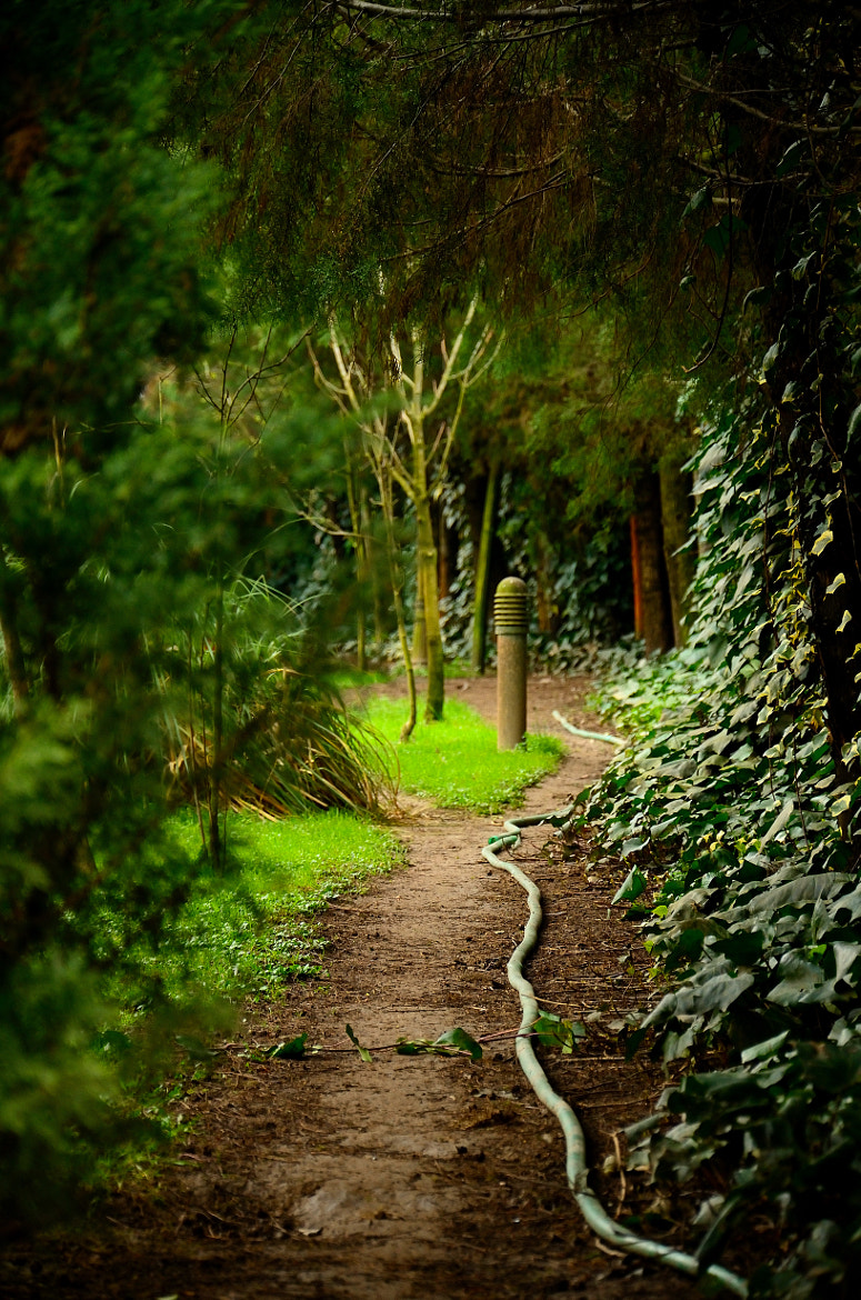 Photograph the path... by Tolga ATIS on 500px