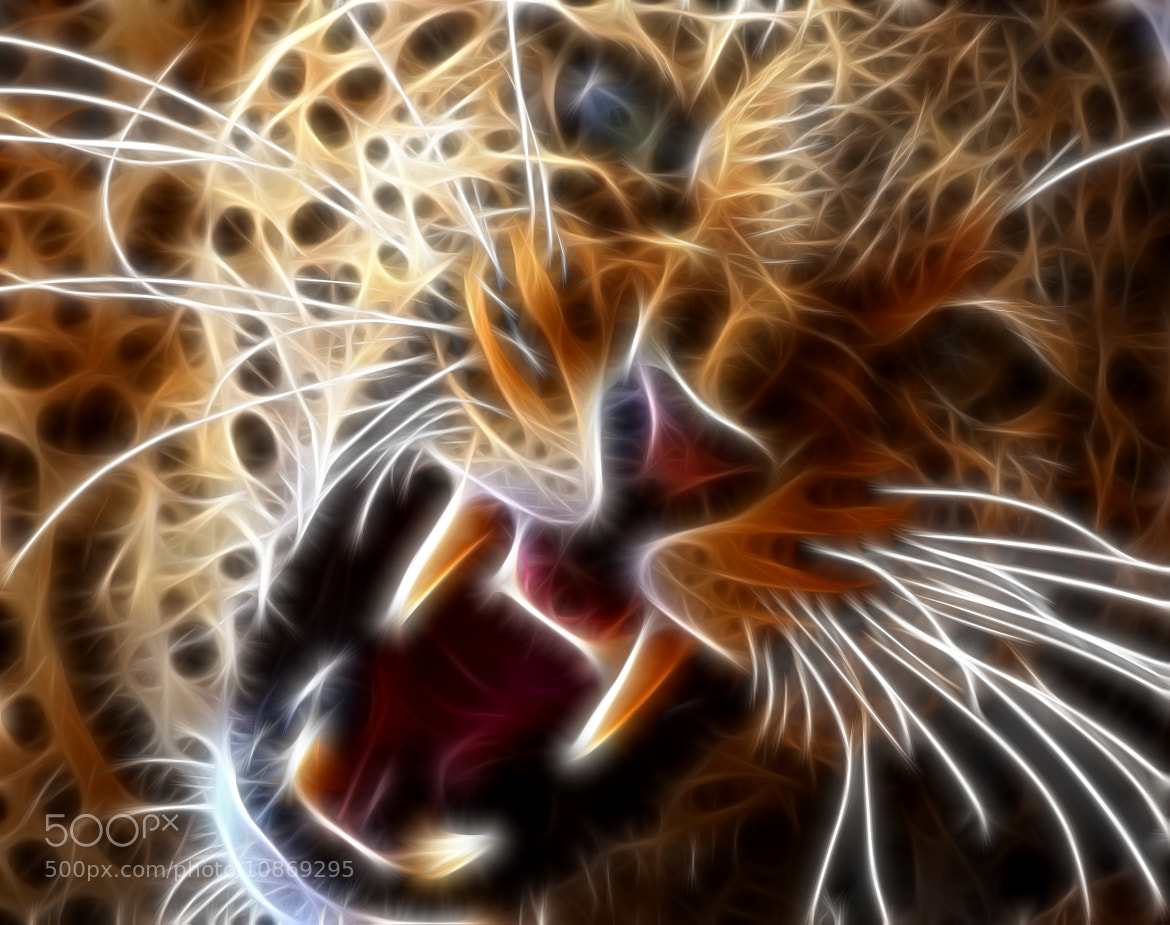 Photograph Neon Leopard  by jamil ghanayem on 500px