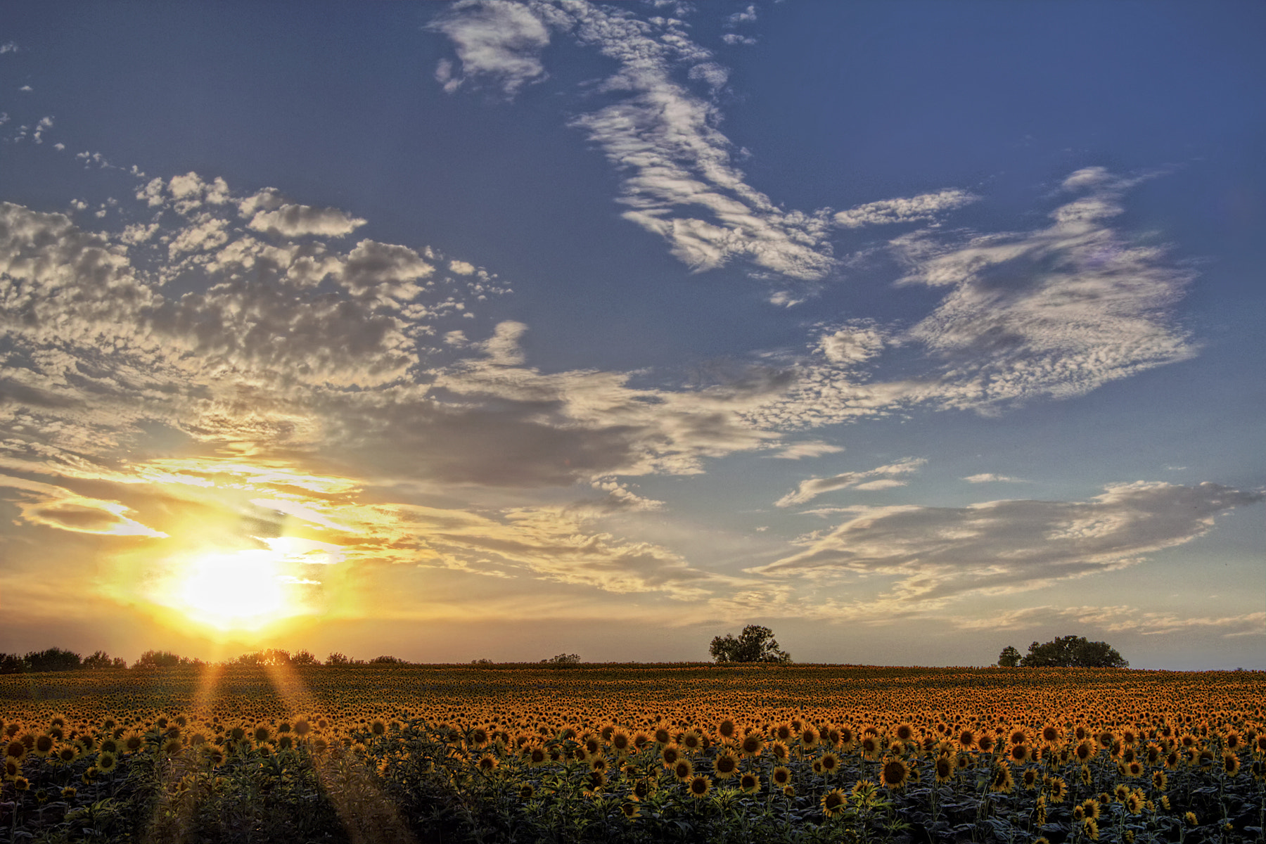 """Photograph """"Sunset sunflowers"""" by Scott Evers on 500px"""