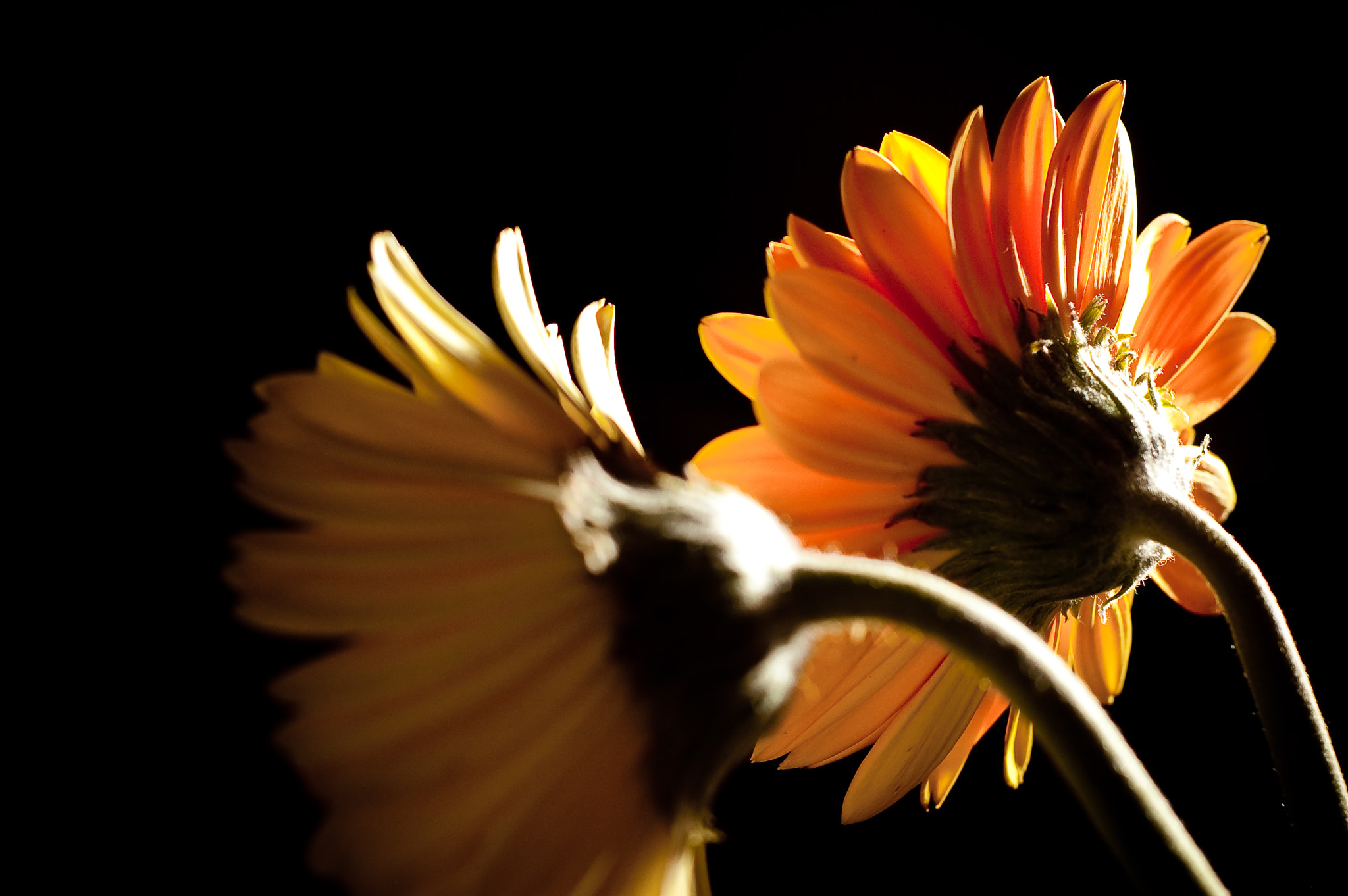 Photograph It was called yellow by Matt Mead on 500px