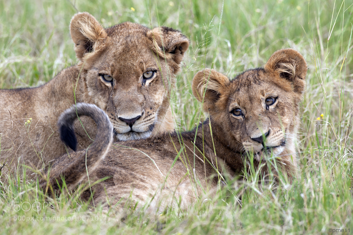 Photograph Mother and cub by Patrick Meier on 500px
