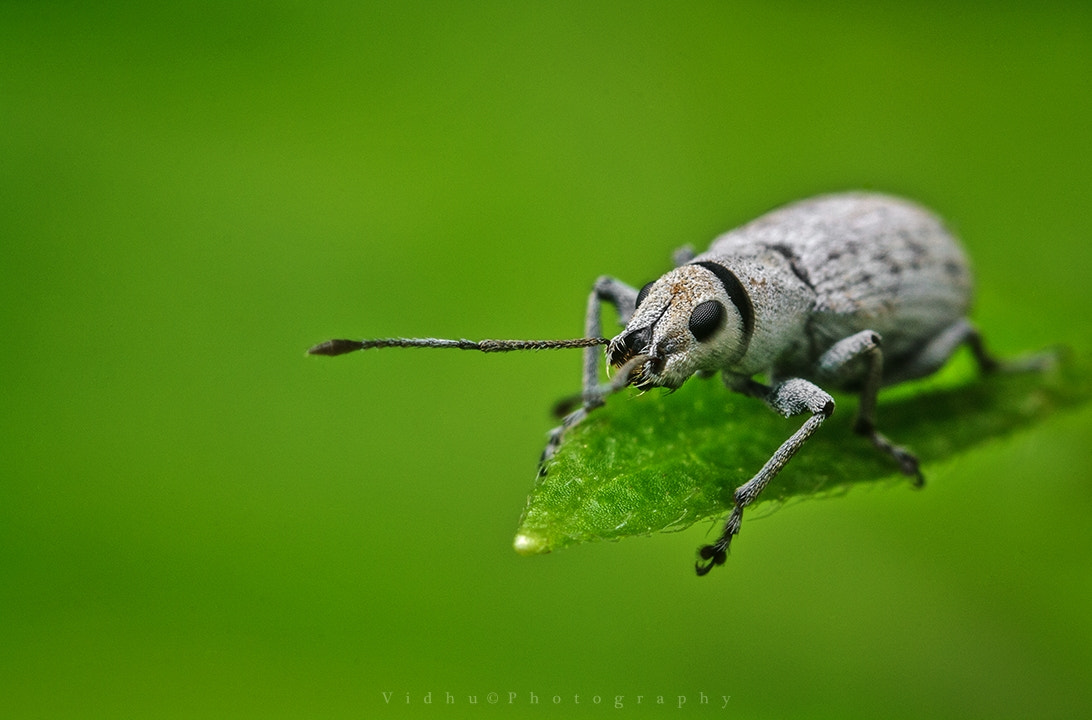 Photograph Black and white bug by Vidhu S on 500px