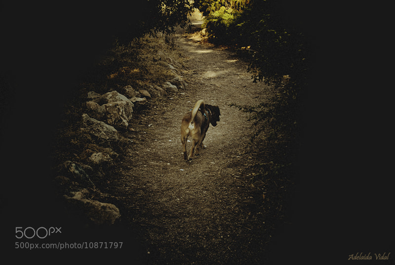 Photograph Doggy walk by Adelaida Vidal on 500px