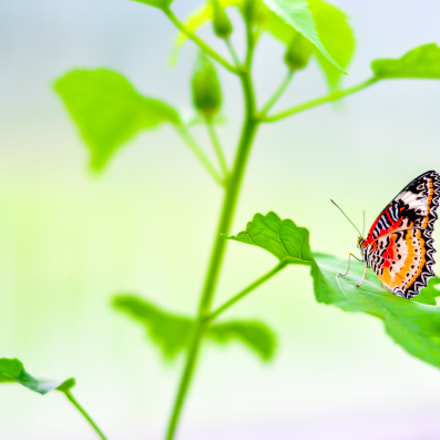 Self propelled flowers - Butterfly