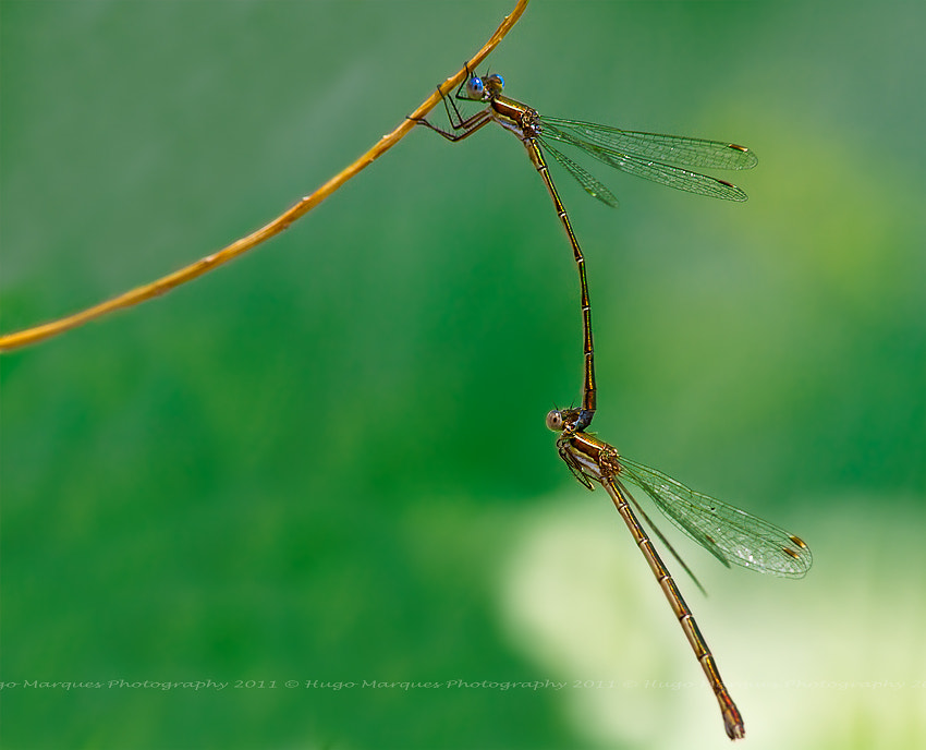 Photograph Love by a string by Hugo Marques on 500px