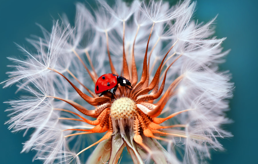 Photograph Thanks LADYBUG !! by Mustafa Öztürk on 500px