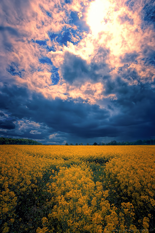 Clouds over the rape field