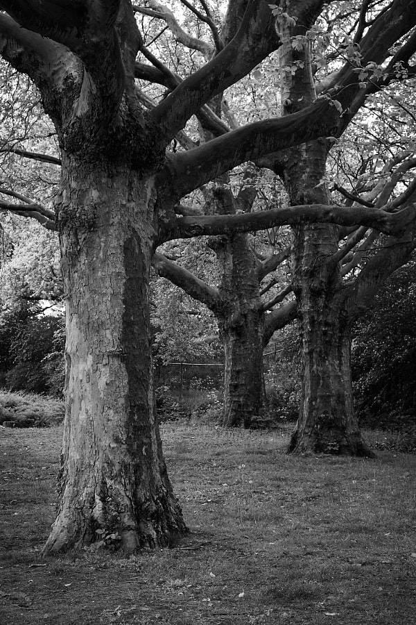 Trees at Fotofestival Naarden