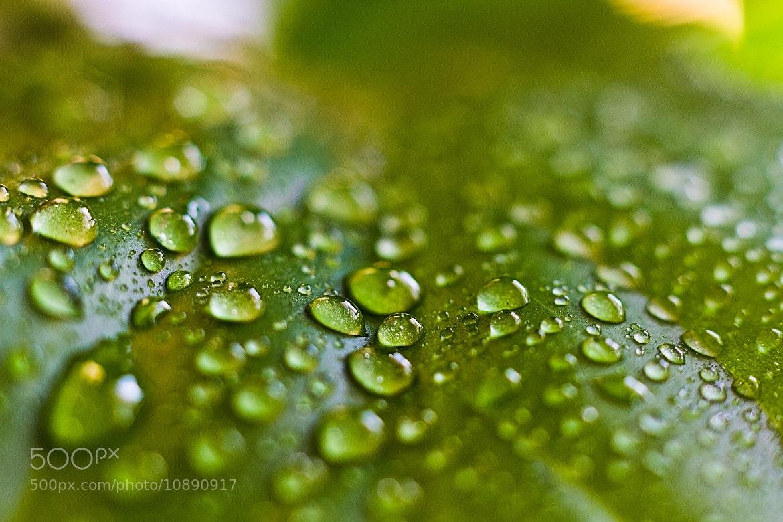 Photograph Humidity by Alexandra Brovko on 500px