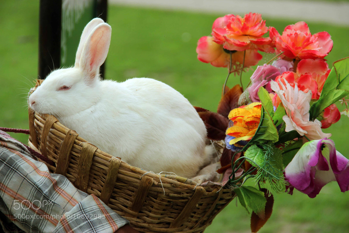 Photograph rabbit by Manish Singh on 500px
