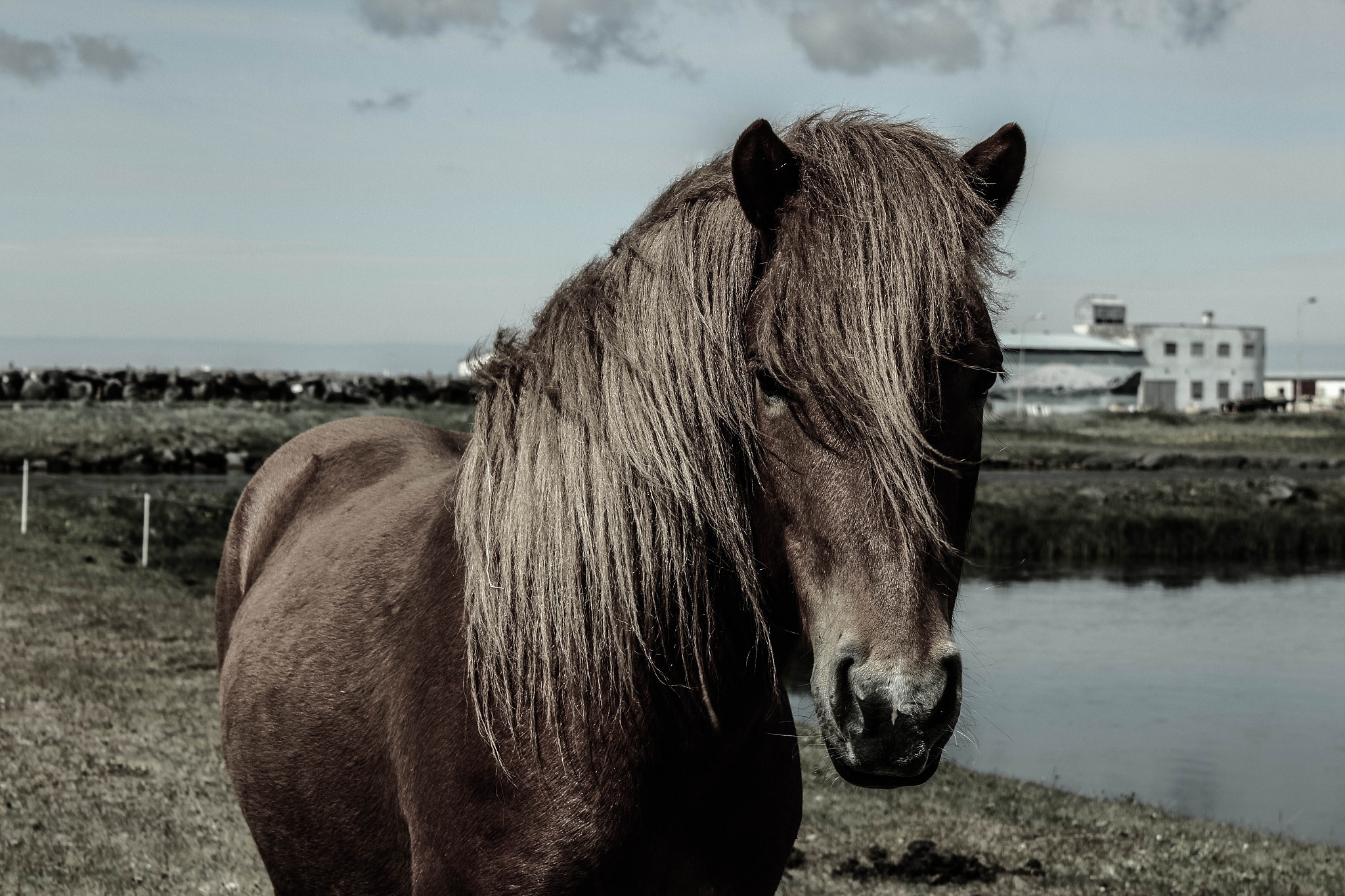 Photograph The Icelandic horse by Victor Ágústsson on 500px