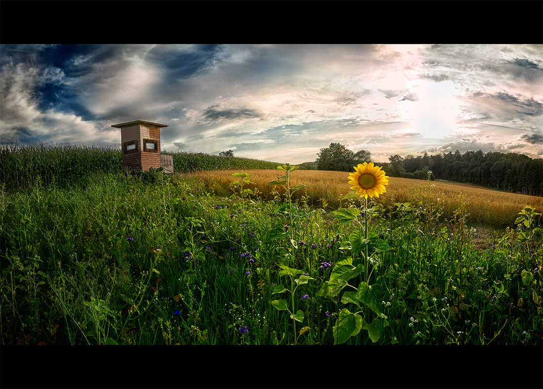 Photograph Sunflower Shooting by Armin Barth on 500px